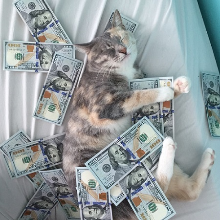 Are you tired of cats having more scholarship money than you?