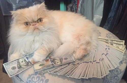 Don't let Cash Cat steal your college cash!