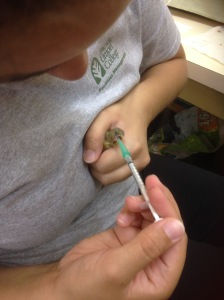 Amanda Garcia uses a small syringe to feed a goldfinch chick.